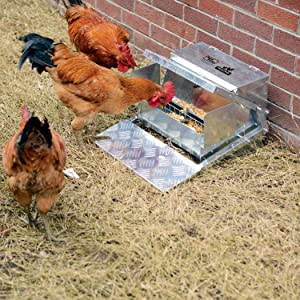 Automatic Chicken Feeder That Prevents Foods from Being Stolen by Birds
