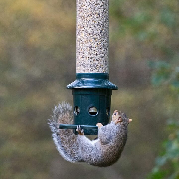 Bird Feeder That Prevents Squirrel from Stealing Seed